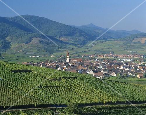 Blick auf Ammerschwihr, Elsass, Frankreich