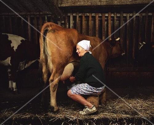 Frauen Beim Melken