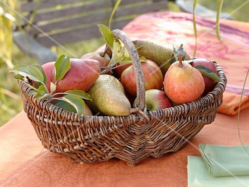 Apples and pears in wicker basket on garden table