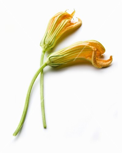 Two courgette flowers