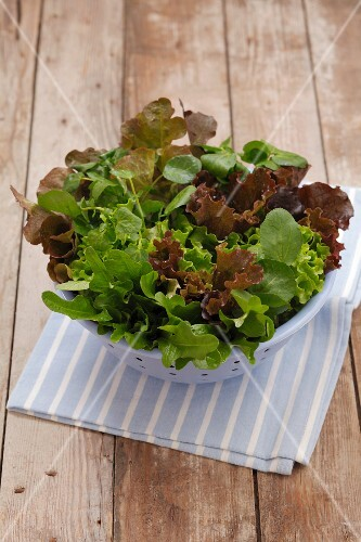 Various types of lettuce in a plastic sieve