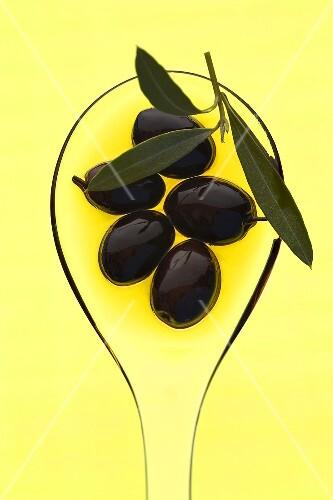 Black olives in olive oil with sprig of olive leaves