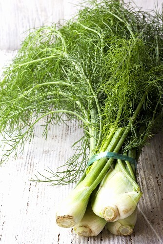A bunch of fennel with leaves