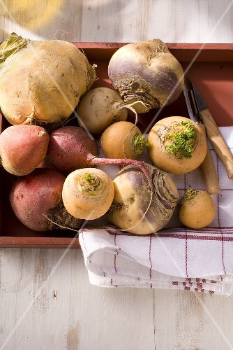 Autumnal vegetables (fodder turnips, swedes, beetroot)