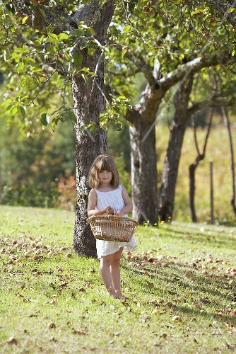 A girl holding a basket of apples beneath an apple tree