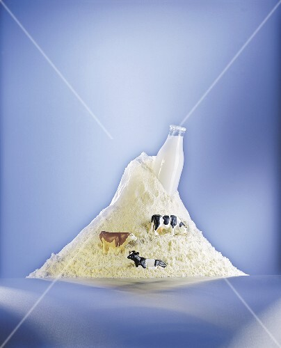 A heap powdered milk with a bottle of milk and plastic cows