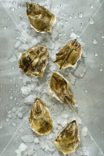 Fresh oysters with crushed ice (overhead view)