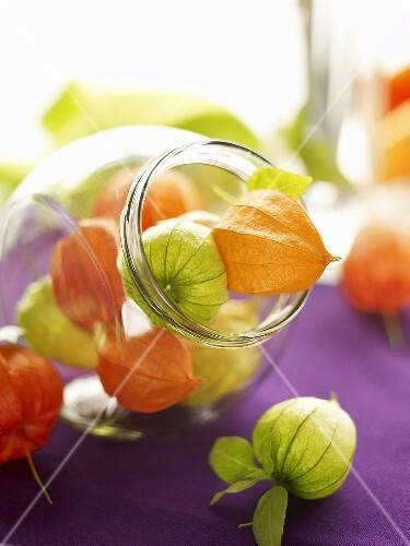 Physalis in storage jars