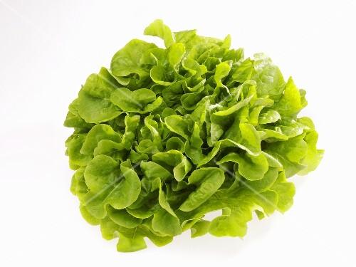 Novita lettuce