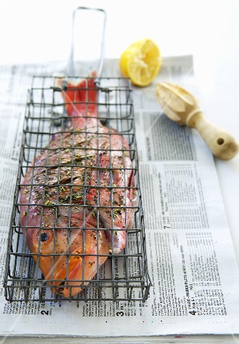 Red Roman in grill basket on newspaper