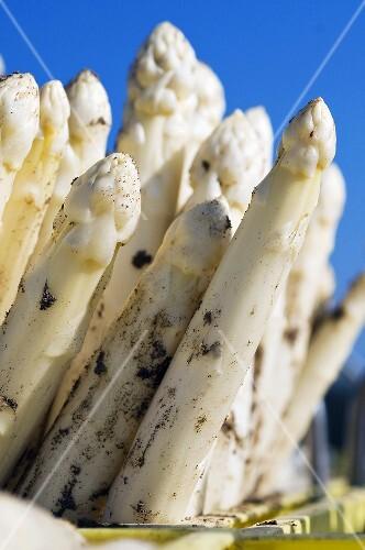 Freshly picked white asparagus