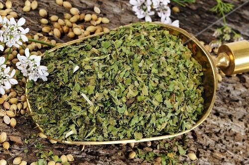 Coriander (dried leaves in scoop, seeds, flowers)