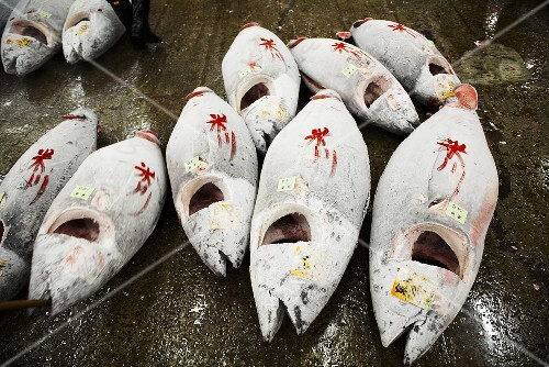 Frozen bluefin tuna, tail fins and gills removed