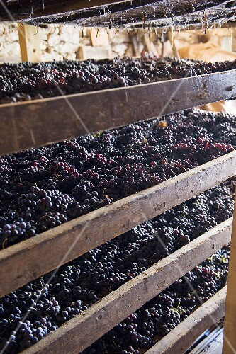 Red grapes drying (Monte dei Ragni wine cellar, Zeno Zignoli)