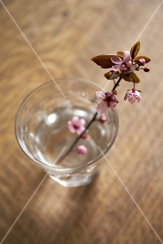 A sprig of flowers in a glass of water