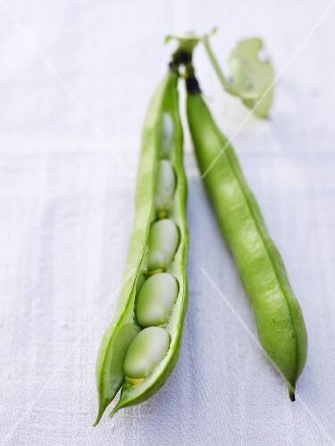 A open broad bean pod