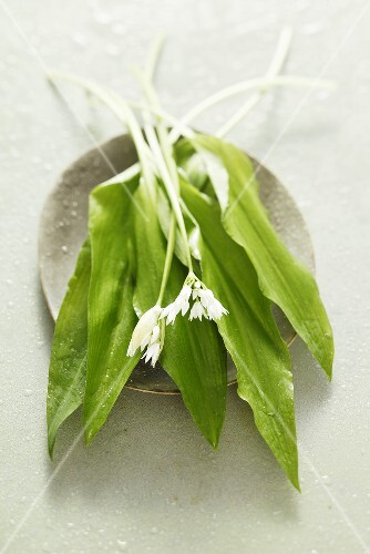 Fresh ramsons with flowers
