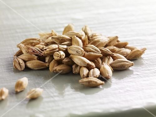A pile of barley grains (close-up)