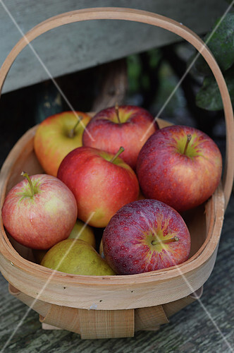 Small basket of apples