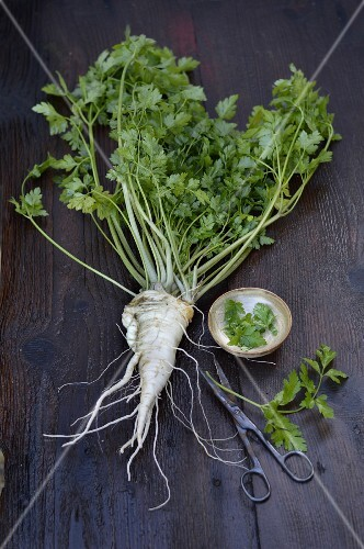 Root parsley