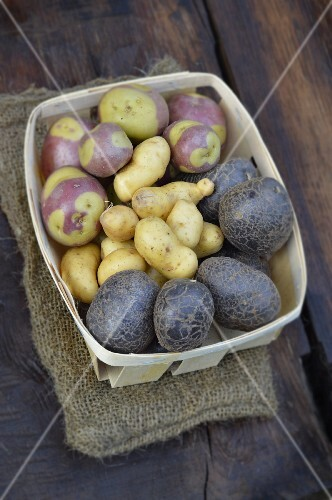 Assortment of old-fashioned potatoes