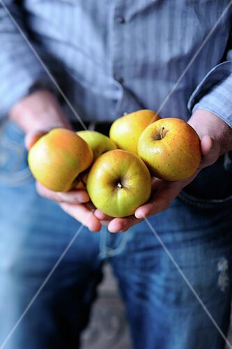 Man holding apples