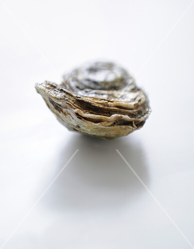 Oyster before opening