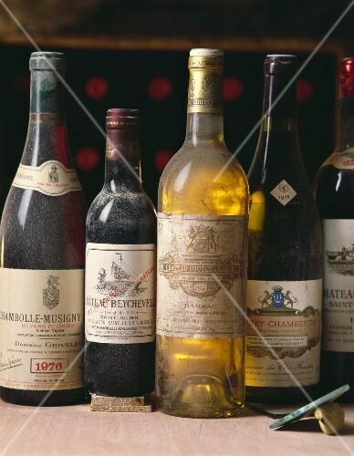 bottles of wine in cellar