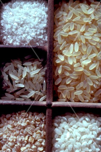 Selection of dry rice