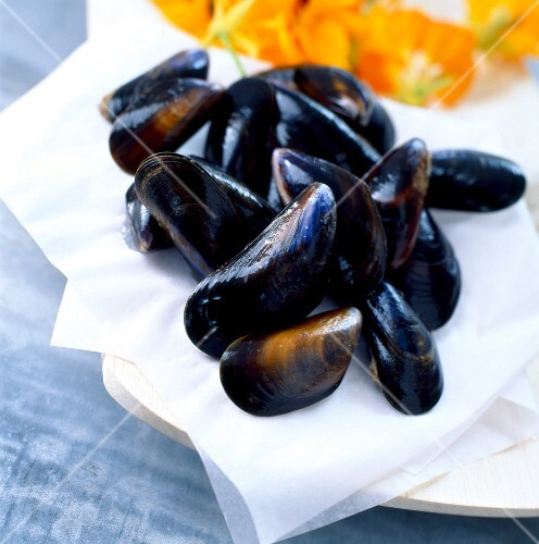 Mussels on cloth