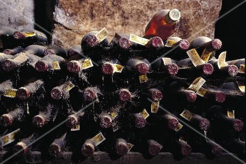 galician albarino wine and basque txakoli wine in cellar