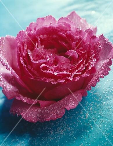 Crystallized rose