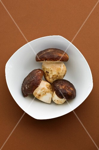 Bowl of ceps