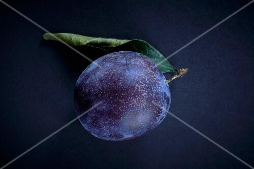 Quetsch plum