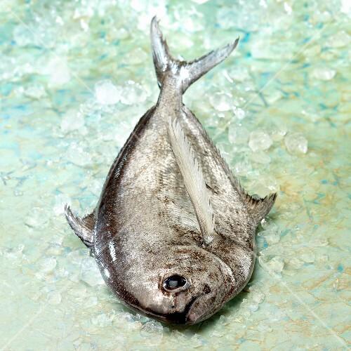 Raw sea bream