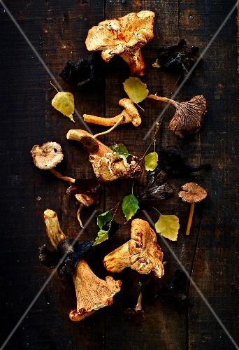 Still life with mushrooms