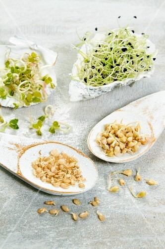 Small dishes of radish sprouts,onion sprouts and rice sprouts