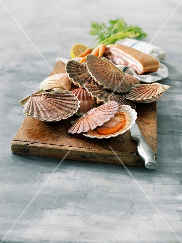 Scallops in their shells