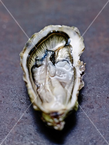 Hollow oyster