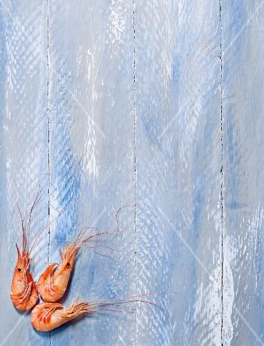 Shrimps on a blue background