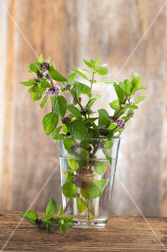 branches of mint in blossum