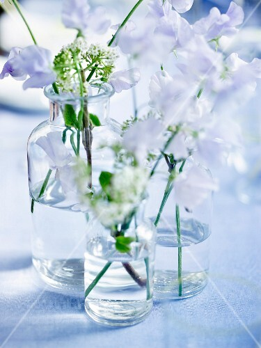 Sweet pea sprigs in vases of water