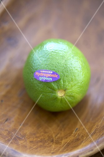 A Single Hydroponic Grown Lime