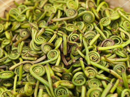 Fiddlehead Ferns at Farmer's Market in Seattle Washington